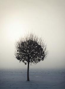 Manuela Deigert, Tree in the winter sun (Germany, Europe)