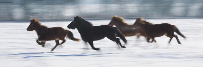 Jens Rosbach, Pferde im Schnee (Deutschland, Europa)