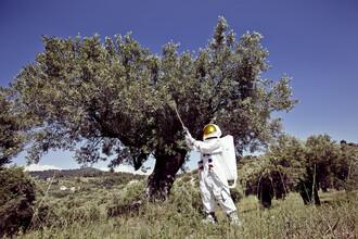 Sophia Hauk, Der Protestonaut vor einem Olivenbaum in Griechenland (Griechenland, Europa)