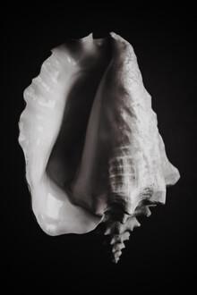 Magda Izzard, Black Shell I (United Kingdom, Europe)