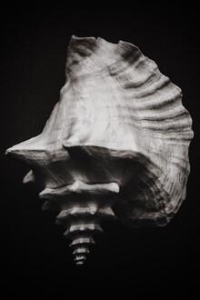 Magda Izzard, Black Shell II (United Kingdom, Europe)