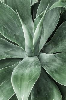 Magda Izzard, Cactus III (United States, North America)