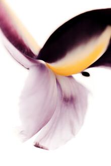 Magda Izzard, Dark Iris (Großbritannien, Europa)