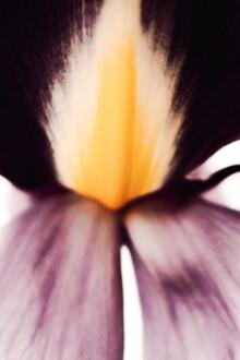 Magda Izzard, Dark Iris I (Großbritannien, Europa)