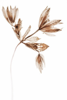 Magda Izzard, Delicate Plant I (Großbritannien, Europa)