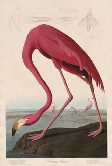 Vintage Nature Graphics, Pink Flamingo - Vintage Illustration (Deutschland, Europa)