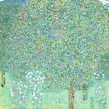 Art Classics, Gustav Klimt: Rosebushes under the Trees (Germany, Europe)