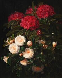 Art Classics, J.L. Jensen: Kamelier og rhododendron (Germany, Europe)