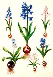 Vintage Nature Graphics, Vintage illustration mixed flowers (Germany, Europe)