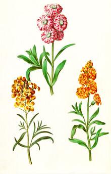 Vintage Nature Graphics, Vintage illustration of blooming flowers (Germany, Europe)