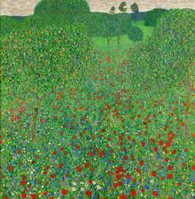 Art Classics, Blooming Poppy by Gustav Klimt (Germany, Europe)