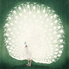 Japanese Vintage Art, Peacock by Ohara Koson (Germany, Europe)