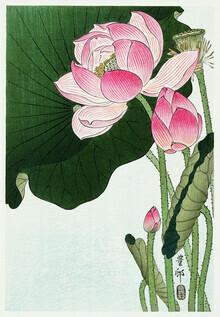 Japanese Vintage Art, Blühende Lotusblumen von Ohara Koson (Deutschland, Europa)