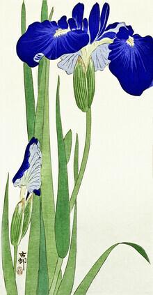 Japanese Vintage Art, Irisblumen von Ohara Koson (Deutschland, Europa)