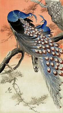 Japanese Vintage Art, Two peacocks in a tree by Ohara Koson (Germany, Europe)