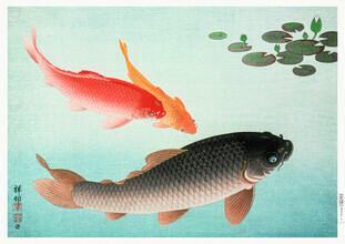 Vintage Nature Graphics, Koi by Ohara Koson (Germany, Europe)