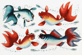 Vintage Nature Graphics, Chinese painting featuring two gold and two silver fish (Germany, Europe)