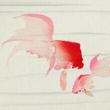 Japanese Vintage Art, Gold fish by Ohara Koson (Germany, Europe)