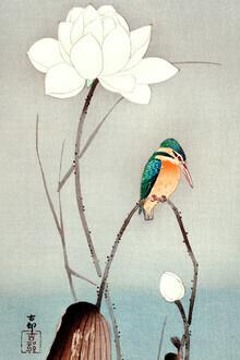 Japanese Vintage Art, Kingfisher with Lotus Flower (Germany, Europe)