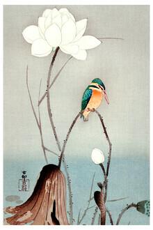 Japanese Vintage Art, Vintage illustration kingfisher (Germany, Europe)