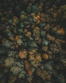 Daniel Öberg, Autumn from above (Sweden, Europe)