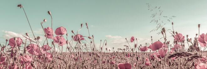 Melanie Viola, Vintage Poppy Field (Germany, Europe)