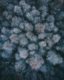 Daniel Öberg, Winter woods (Sweden, Europe)