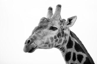 Dennis Wehrmann, Giraffe (Botswana, Afrika)