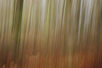 Nadja Jacke, blurred forest (Germany, Europe)
