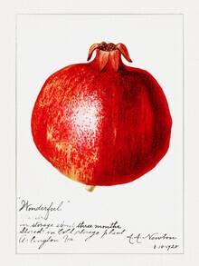 Vintage Nature Graphics, Vintage Granatapfel (Vereinigte Staaten, Nordamerika)