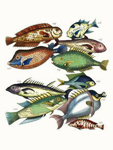 Vintage Nature Graphics, Vintage fish (brown and green) (Germany, Europe)