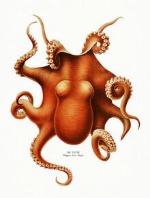Vintage Nature Graphics, Vintage Octopus Illustration (Germany, Europe)