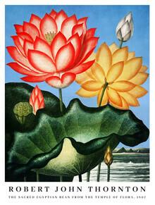 Vintage Nature Graphics, Robert John Thornton: The Sacred Egyptian Bean (Vereinigte Staaten, Nordamerika)