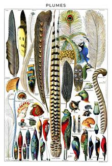 Vintage Nature Graphics, Plumes (Frankreich, Europa)
