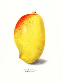 Vintage Nature Graphics, Mango (Vereinigte Staaten, Nordamerika)