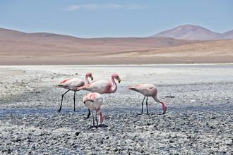 Kay Wiegand, Lagoon Flamingos (Bolivien, Lateinamerika und die Karibik)