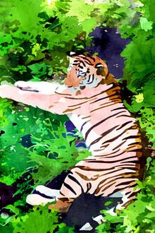 Uma Gokhale, Blush Tiger (India, Asia)