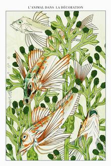 Vintage Nature Graphics, L'animal Dans La Decoración (Frankreich, Europa)