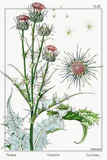 Vintage Nature Graphics, Maurice Pillard Verneuil: Chardon (Deutschland, Europa)
