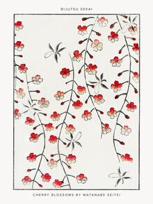 Japanese Vintage Art, Watanabe Se: Cherry Blossom Illustration (Germany, Europe)