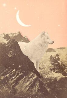 Florent Bodart, Großer weißer Wolf in den Bergen (Deutschland, Europa)