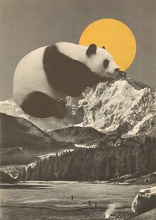 Florent Bodart, Giant Panda Nap (Deutschland, Europa)
