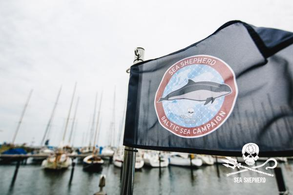Protect endangered Harbor Porpoises